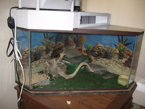 dry reptile enclosure(gecko,bearded dgagon)