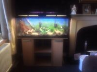 60 gallon fish tank