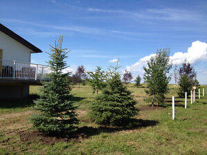 Trees for your acreage