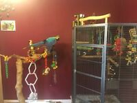 Blue and Gold Macaw, Large Corner Cage, Large Java Tree