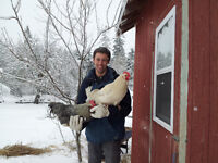 Want to care for chickens, eat farm fresh eggs and earn income?