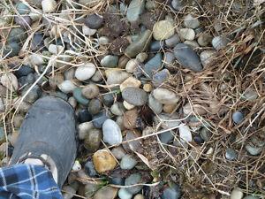 Rocks/Pebbles for Landscaping
