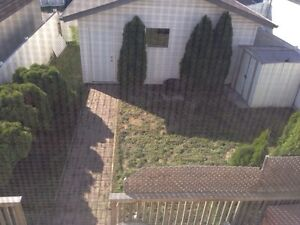 Landscaping and house cleaning services Edmonton Edmonton Area image 3