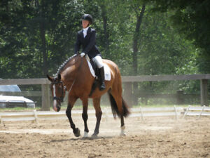 For lease: clyde/to gelding, easy all 'rounder