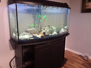 60 gallon fish tank with stand