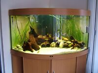 Jewel Trigon 350 bow fronted tank with stand