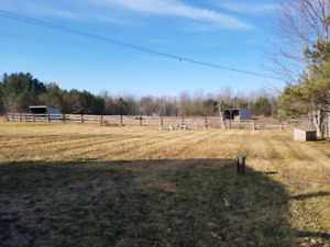 3 - 4 DIY horse boarding spots available