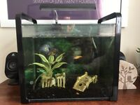Fish tank - perfect for beginners