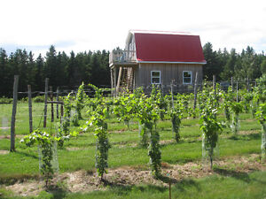 Loft in the Vineyard - Pictou Island