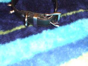 Leather Spiked Dog collar -heavy duty stuff