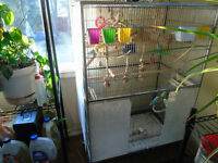 7 budgies and a big cage for sale for 200$