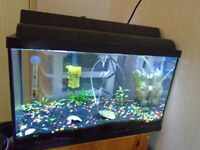 10 gal full set up with fish need gone asap