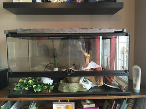 Lizard Tank and Accessories (complete set-up)