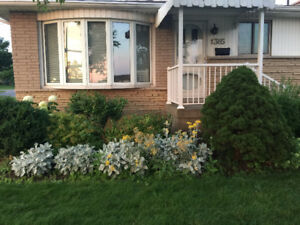 Separate Entrance 2+ Bedrooms Lakeview Basement Apt