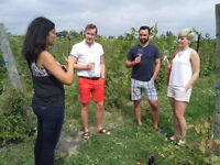 Grape Vine Tours Inc. - Wine , Craft Beer and Spirit Tours