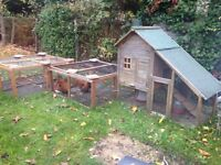 Chicken hutch + 2runs + 2chickens