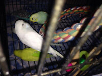 big bird cage for sale 45