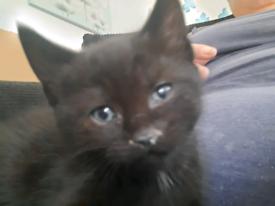Kittens Only 1 left