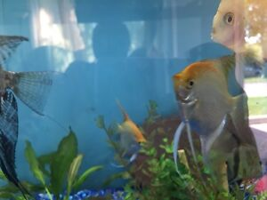 Tank and fish for sale all together !!