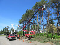 Tree Removal...We Have 100' Reach Equip. And Know How To Use It!