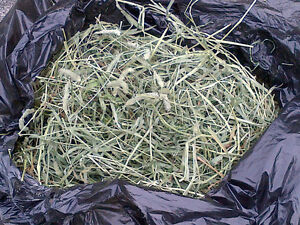 *** TIMOTHY HAY $1 CHEAP Fresh Cut Timothy Hay FREE DELIVERY