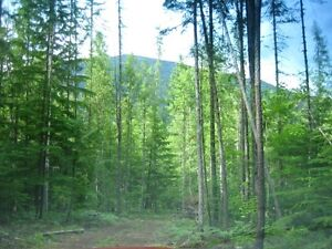 5.5+ acres for sale Revelstoke British Columbia image 5