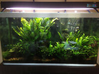 Fluval 84 gallon full planted tank setup w/ pressurized CO2