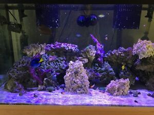 125G Salt Water Aquarium - Priced to Sell!