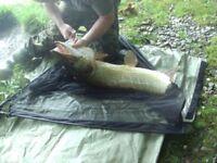 Fishing for pike sea coarse