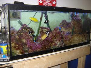 70 Gal Salt water aquarium package.