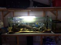 180l fish tank