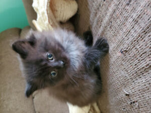 FEMALE KITTENS READY TO BE REHOMED