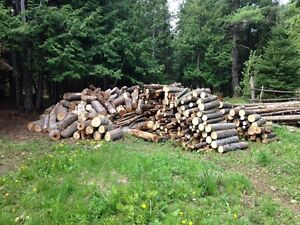 Free campfire wood, firewood or outdoor fireplace wood and logs