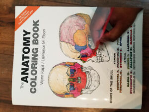 anatomy flash cards & coloring book