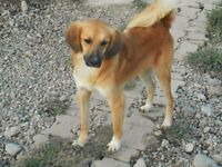 Sweet and loveable medium size dog for adoption