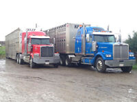 Looking for Class 1 Driver to Haul Cattle & Grain