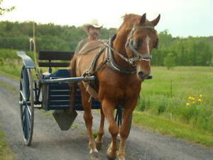 voiture a  chevaux