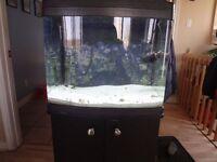 aquarium eau salée 29 gallons biocube