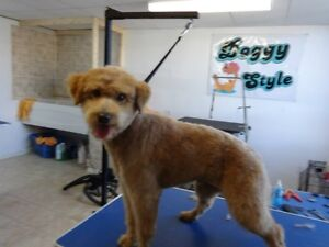 DOGGY STYLE GROOMING Cornwall Ontario image 4