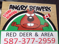 FOR THE CHEAPEST & SAME DAY STUMP REMOVAL CALL ANGRY BEAVERS