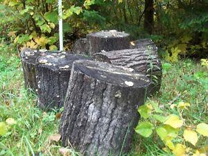 Bûches de bois de tremble sec en longueur de 18 po.