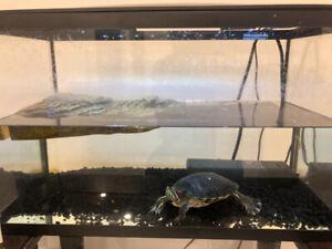 tortue et aquarium