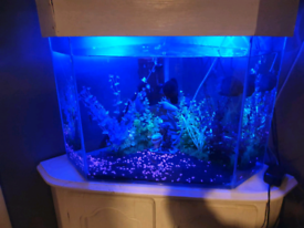 Fish tank with heater and filter also comes with the cabnit and lid