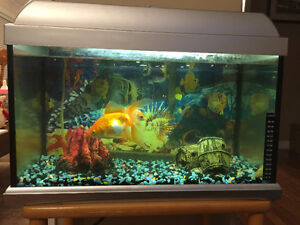 Goldfish, Tank, Table and Accesories REDUCED St. John's Newfoundland image 2