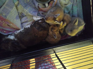 4 littles bunnies ready for adoption