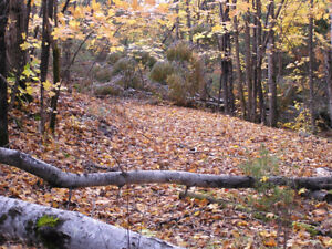 79 Acre Recreational, Hunting, or Building Lot Property