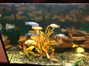 Great condition 90 gallons aquarium with everything