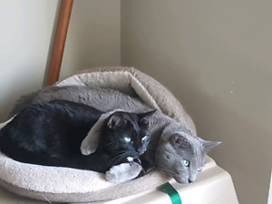 Adult cats looking for loving home