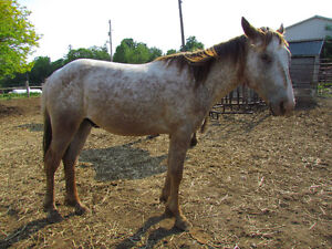 Project Colt - 2 Yr old - SOLD - Thanks to all inquires Peterborough Peterborough Area image 3