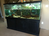 200 Gallon Fish tank for sale with Water Turtle